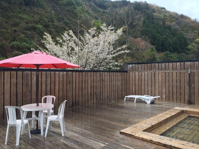 春は桜を愛でながら